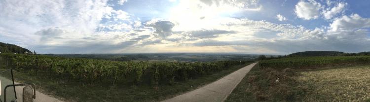 Lukas Kesselrings vinmarker i den tyske region Pfalz