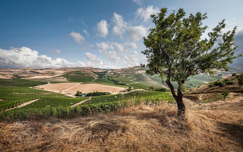 weitläufige Weinberge von Tasca d'Almerita